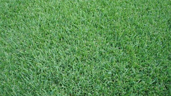 flortam-grass