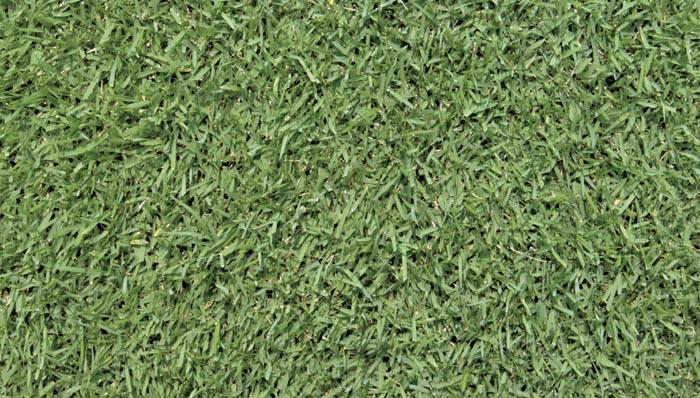 zoysia-turf-grass